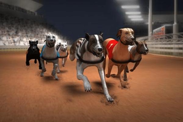 thể thao đua chó ảo